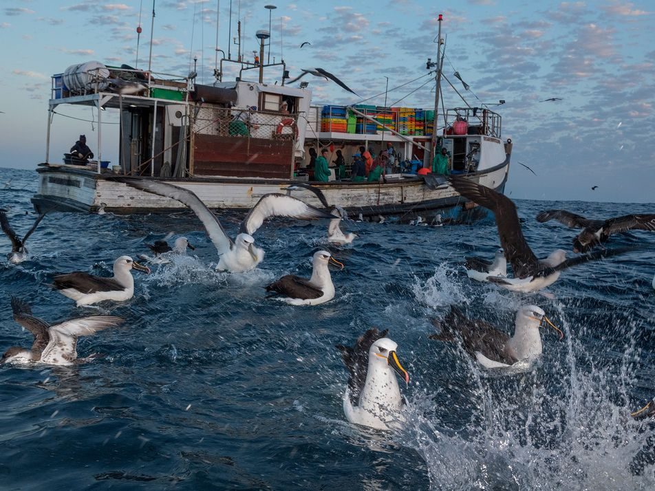 Quand le plastique ne tue pas, il met en danger la vie des oiseaux marins