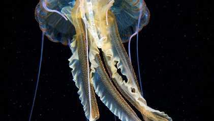 L'emballage d'un paquet de cigarettes retrouvé dans une méduse