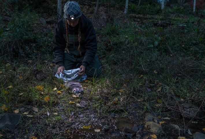 Tahneal Hawke, de l'université de Nouvelle-Galles du Sud, relâche un ornithorynque dans la rivière Mita Mita dans l'État ...