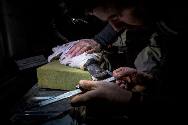Des chercheurs mesurent le bec d'un ornithorynque dans le cadre d'une étude menée par l'agence Melbourne ...