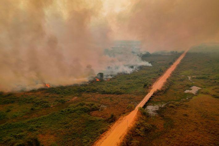 Des incendies ravagent la végétation le long de la Transpantaneira, une route qui traverse le Pantanal.