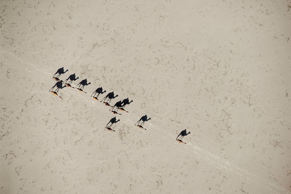 La traversée des chameaux