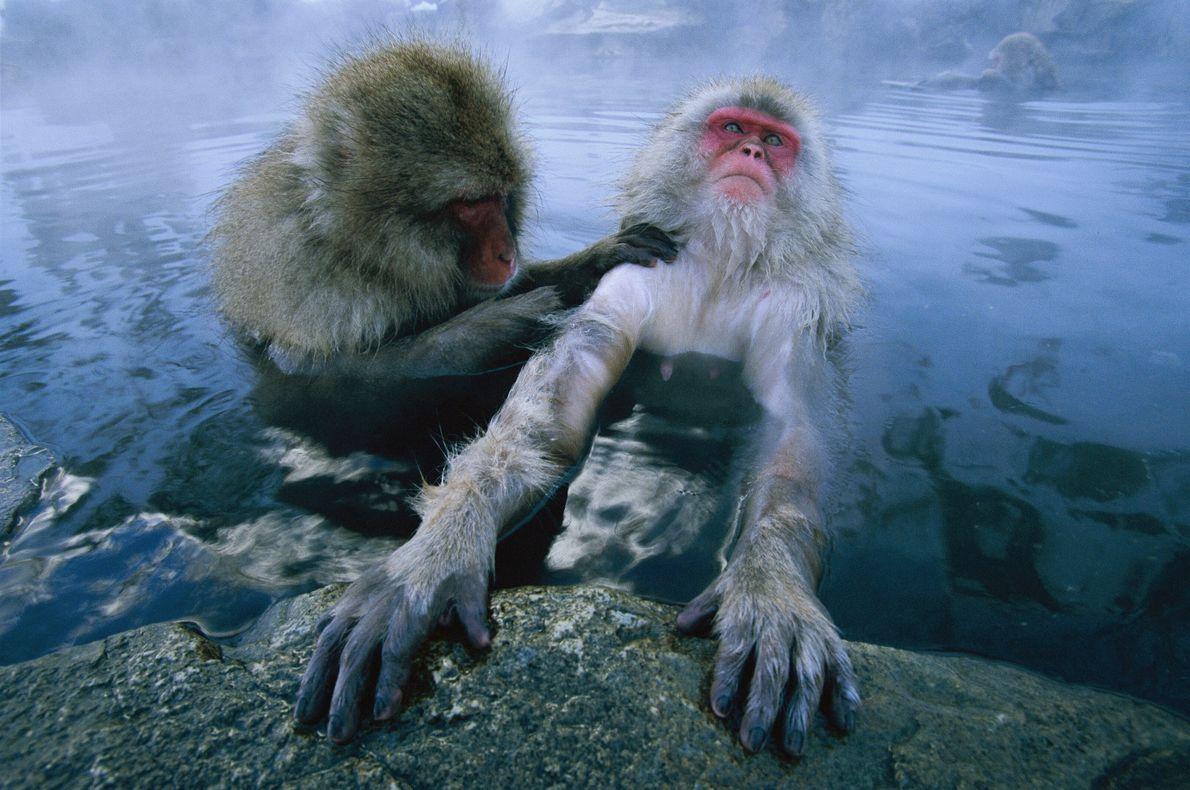 Au bain !