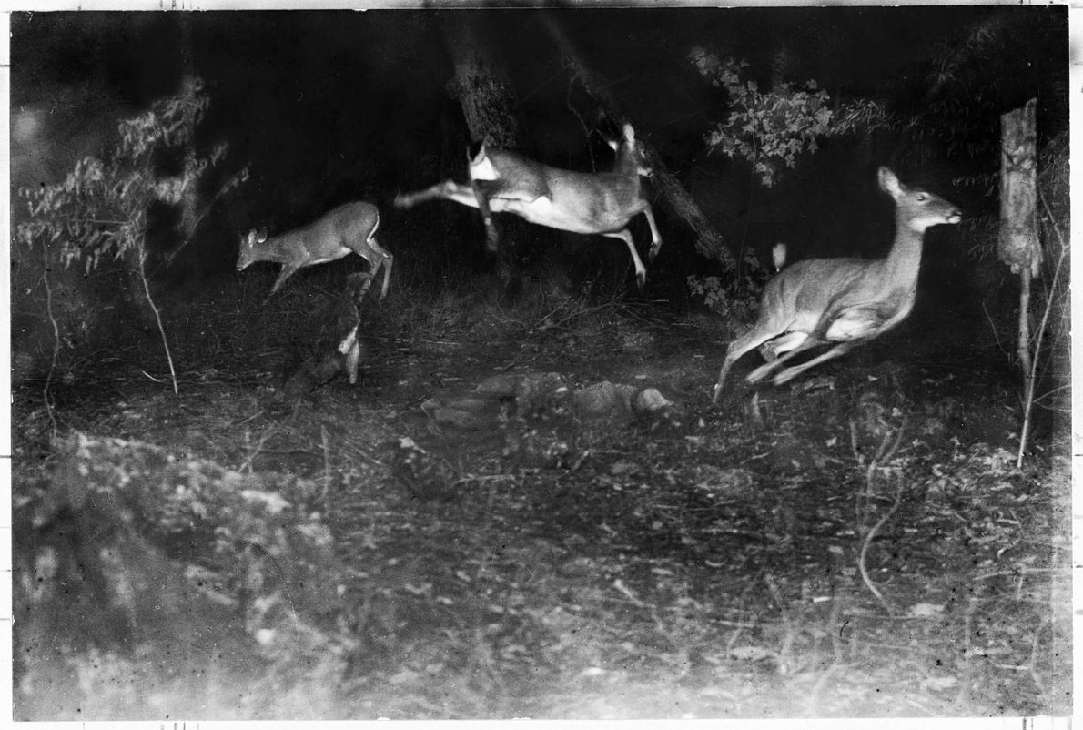 Image nocturne
