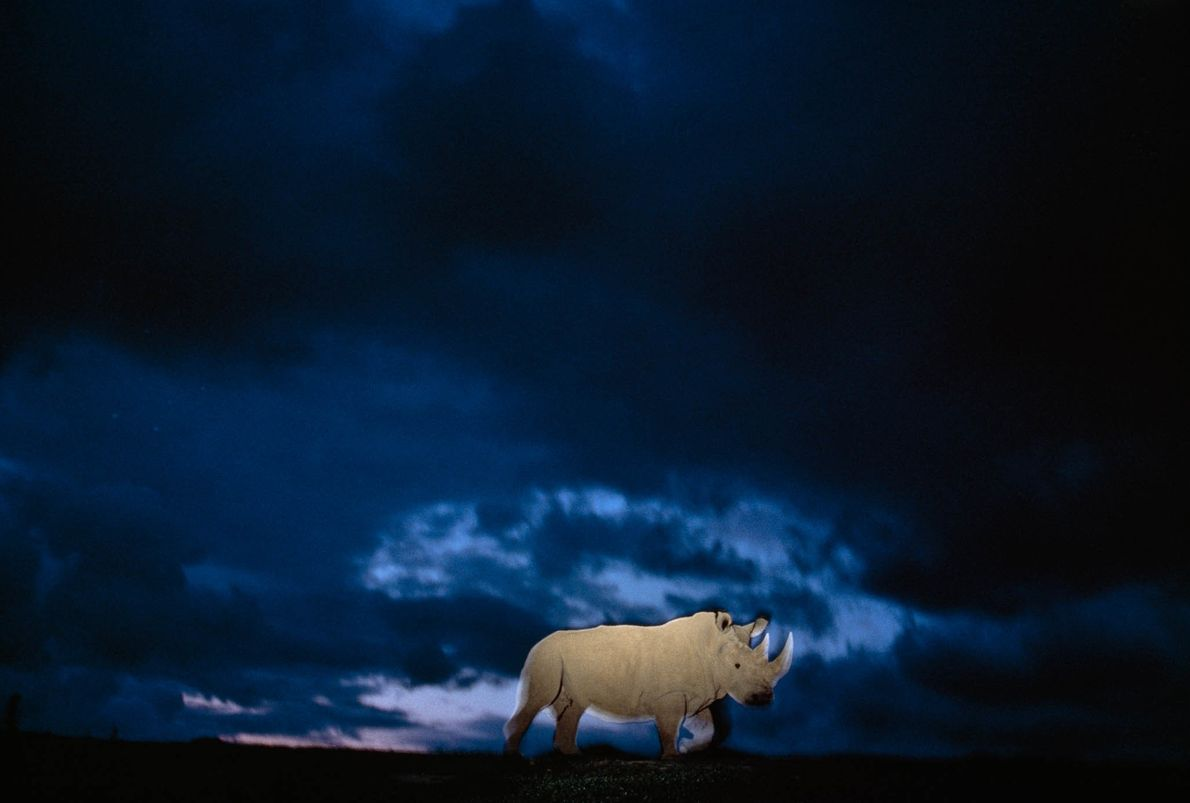 Lost Rhino