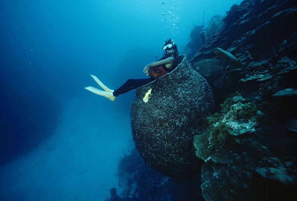 Pause sous-marine