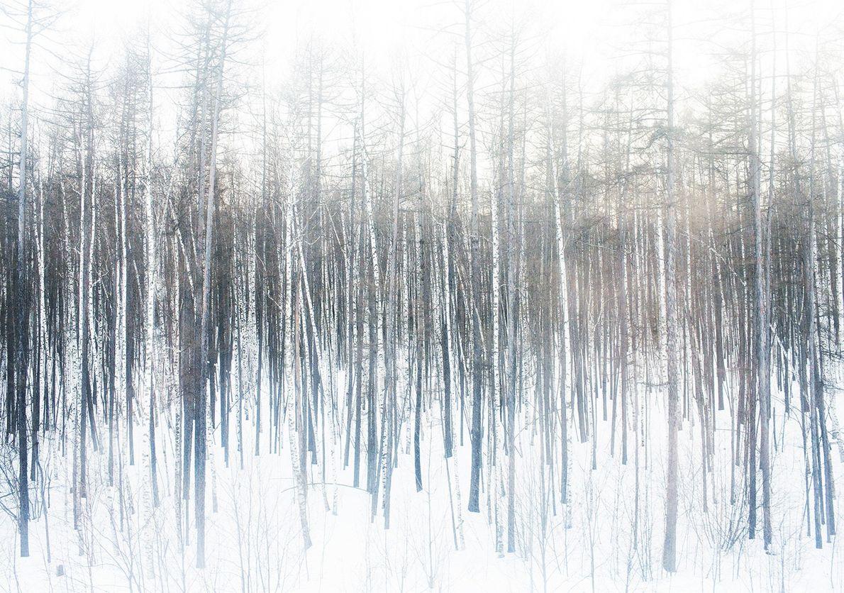 Forêt silencieuse