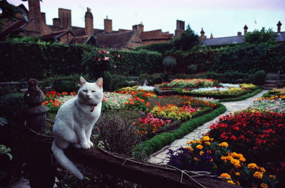 Dans le jardin de Shakespeare