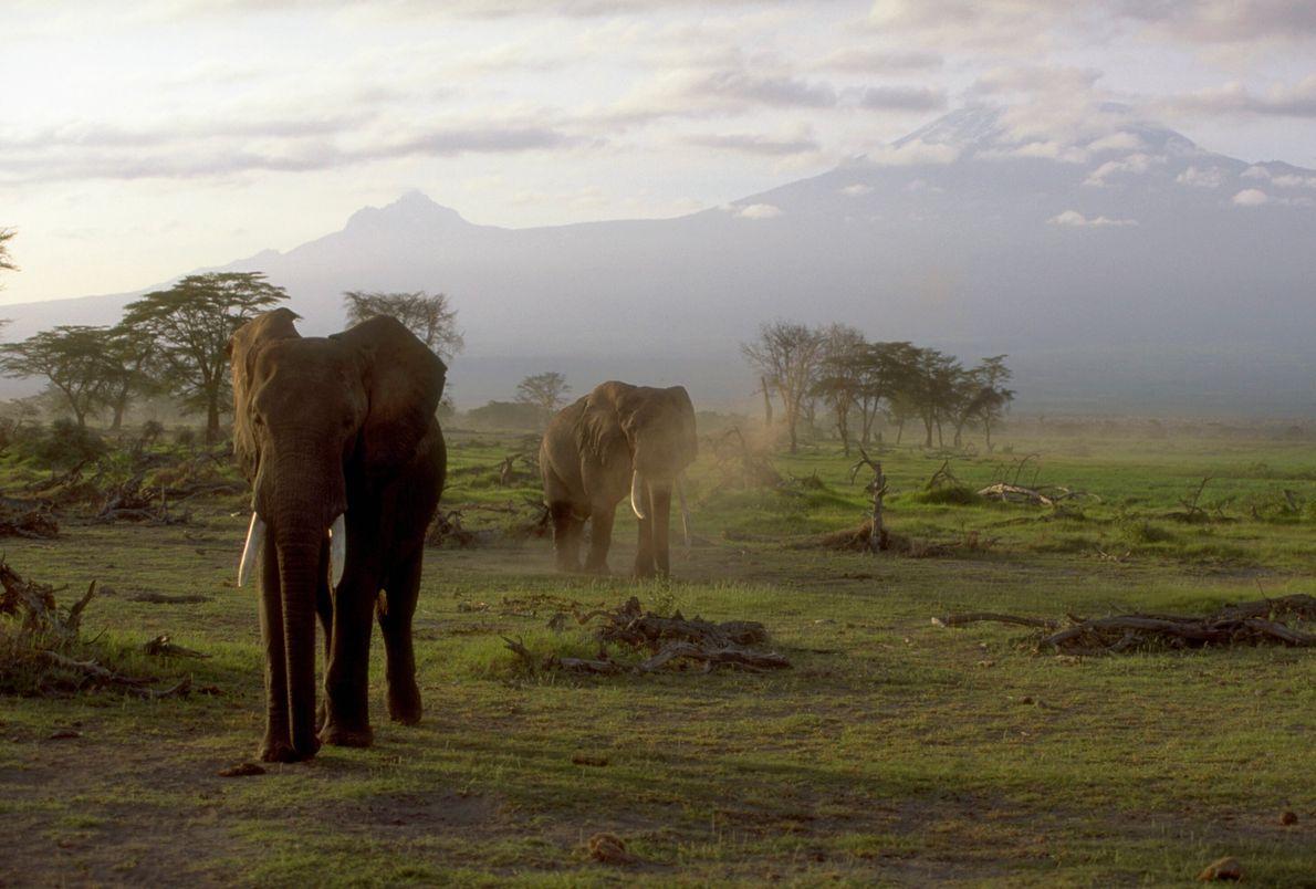 Au rythme des éléphants