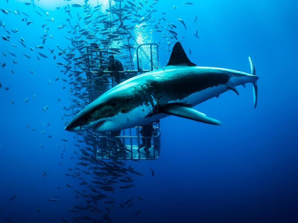 29 images saisissantes de requins, les prédateurs des océans