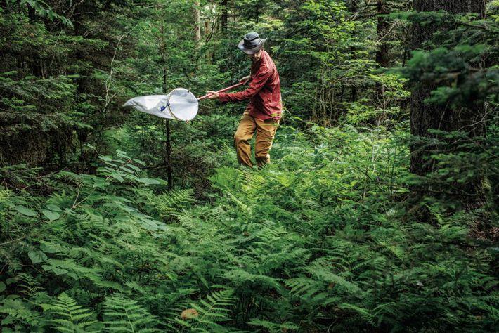 Dans les Great Smoky Mountains, Graham Montgomery, doctorant à l'université de Californie à Los Angeles, prélève ...