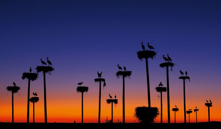 oiseaux migrateurs cigognes