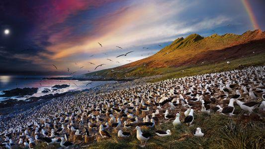 Comment s'orientent les oiseaux migrateurs ?