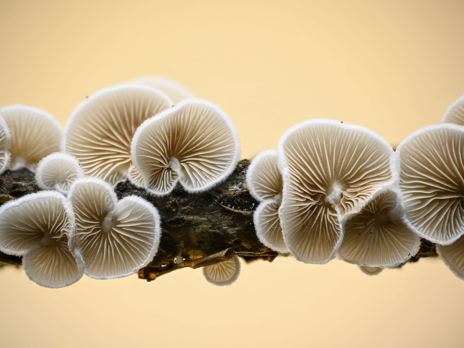Photographie : le monde féérique des champignons