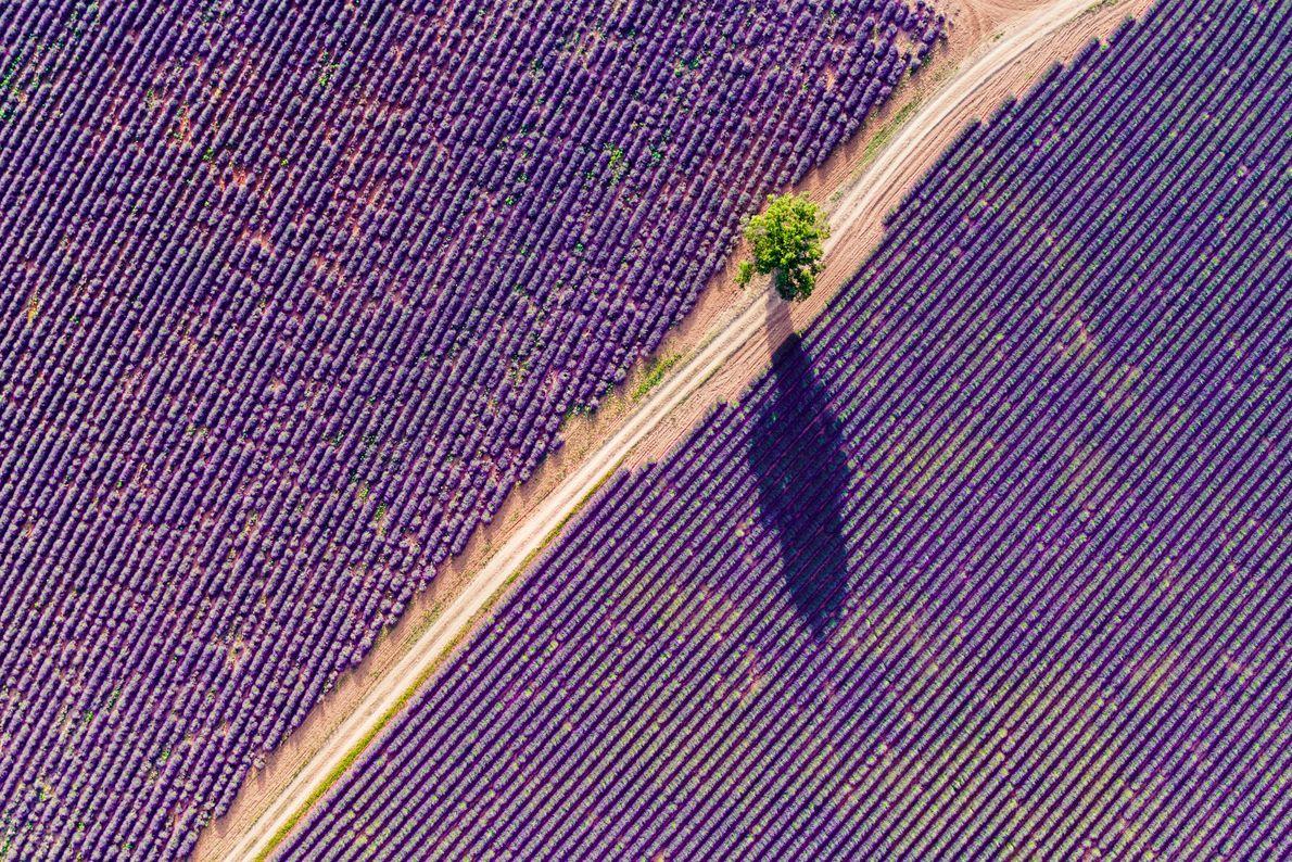 LA PROVENCE : BOL D'AIR PARFUMÉ.  En Provence, on l'appelle l'or bleu. Emblème de la région, son «âme» ...
