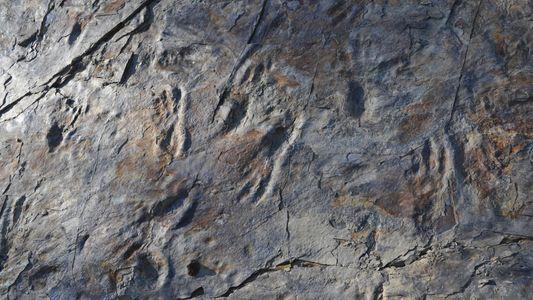 Paléontologie : découverte d'un crocodilien bipède