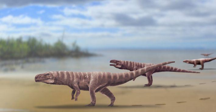 Reconstitution du Batrachopus grandis, une nouvelle espèce de crocodylomorphe qui aurait vécu il y a 110 millions ...