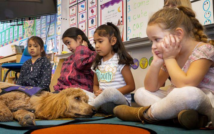 Des écoliers observent attentivement « Rudy », un chien de soutien psychologique venu avec son maître le premier ...