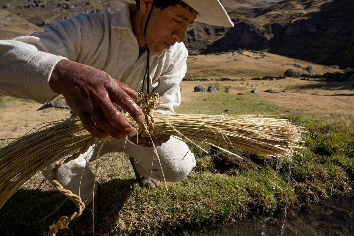 L'herbe d'ichu est trempée dans l'eau avant d'être tordue pour être transformée en corde. Chaque famille ...