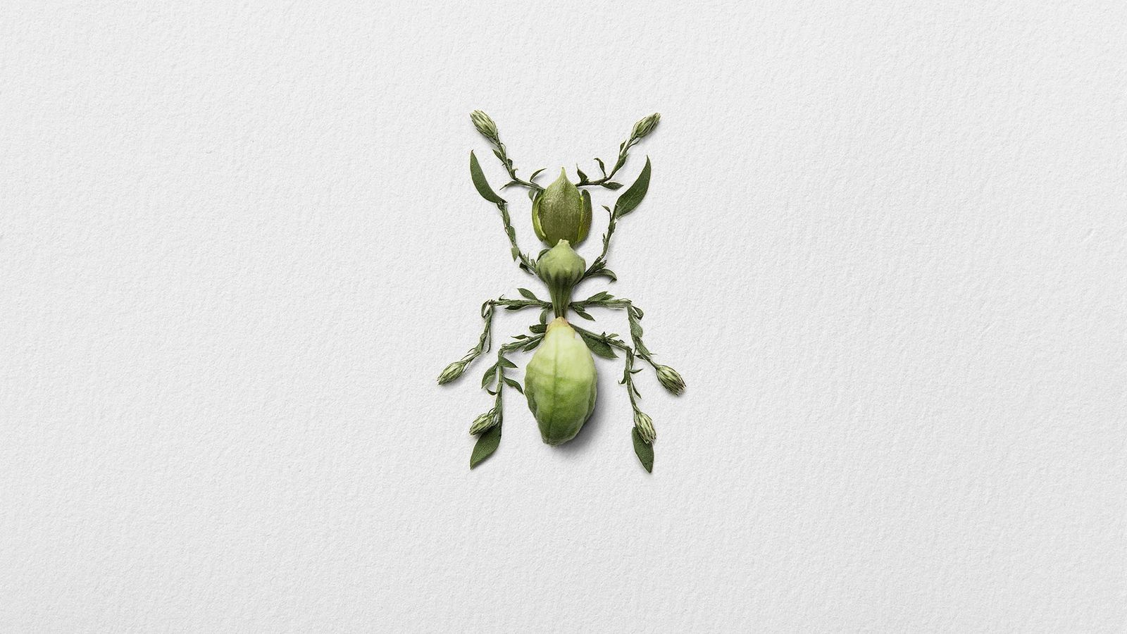 Pour cette fourmi, l'artiste a utilisé des bourgeons de lis d'un jour associés aux feuilles et ...