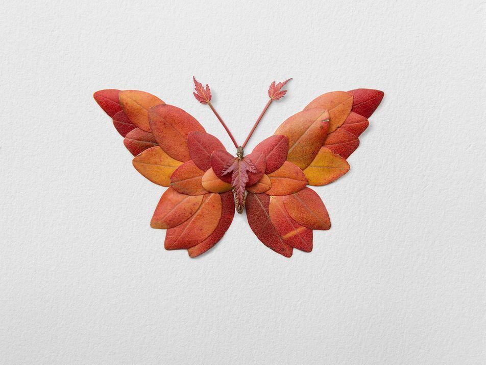 Les insectes floraux de Raky Inoue