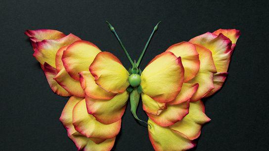 Ce papillon composé de pétales de rose offre un nouveau regard sur la nature… et ses ...