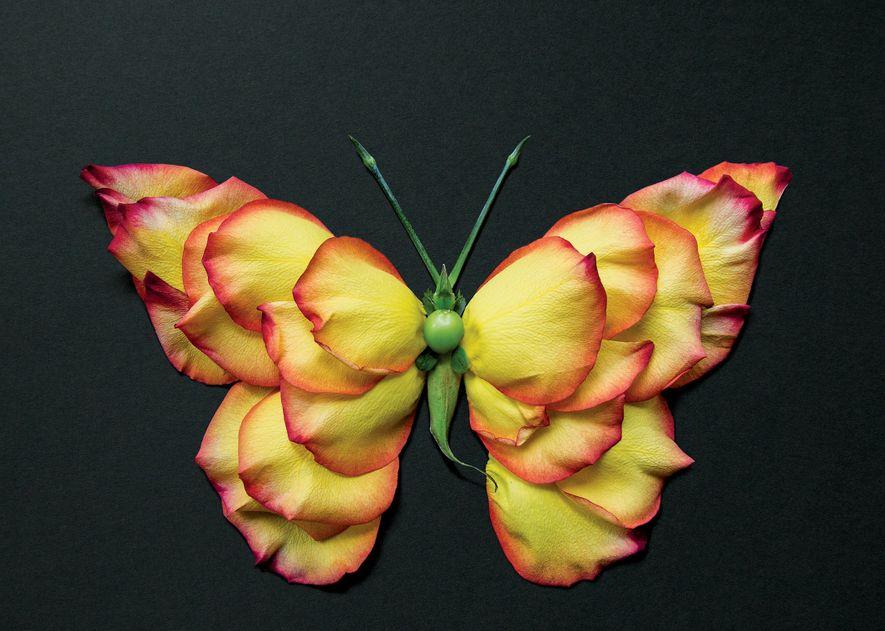 Ces somptueux portraits d'insectes ne sont pas du tout des insectes