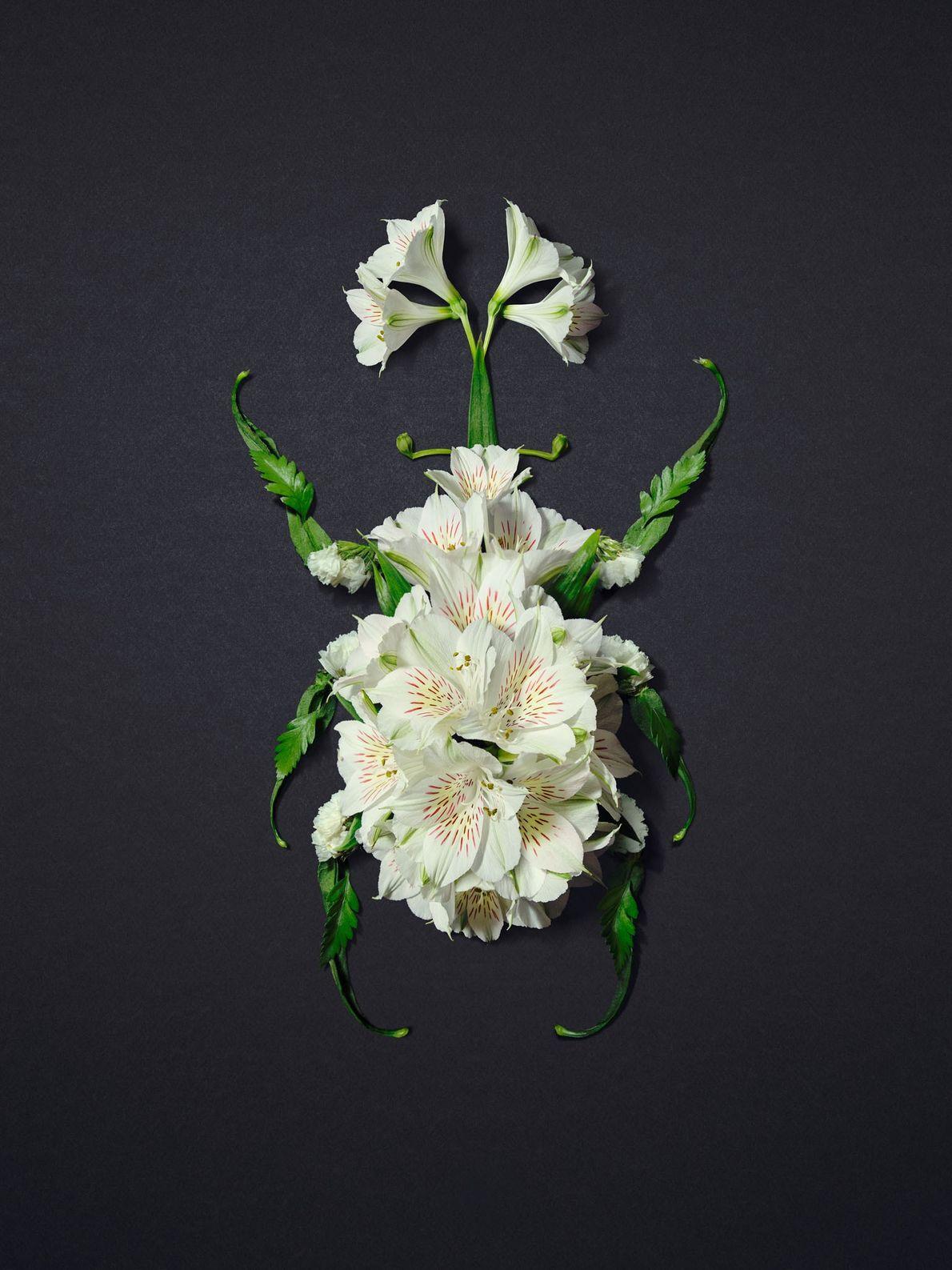 Un kabutomushi, ou scarabée-rhinocéros japonais, esquissé à l'aide de fleurs d'alstrœmères.