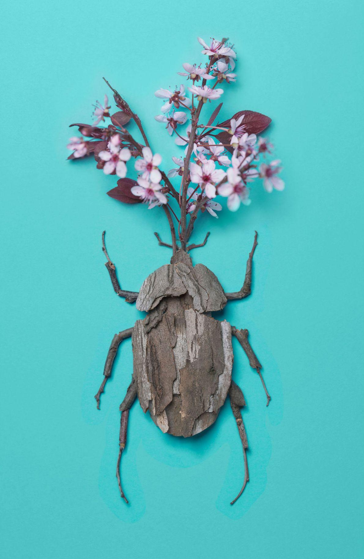 Un autre scarabée-rhinocéros japonais, réalisé cette fois avec des fleurs de prunier.