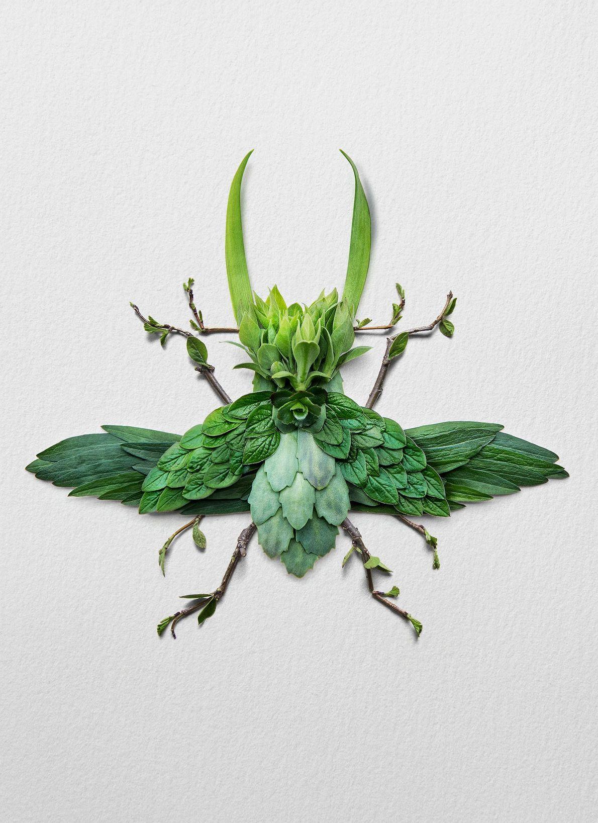 Les lucanes sont un symbole culturel au Japon, pays natal de l'artiste Raky Inoue. En hommage, ...