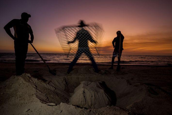 Sur la côte ouest de la péninsule australienne du cap York, les rangers du programme de ...