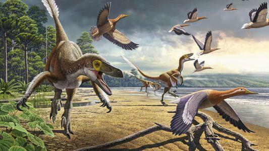 Comment les oiseaux ont-ils pu échapper à l'une des plus grandes extinctions de tous les temps ...