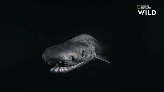 Le requin-lézard, tout droit sorti de vos pires cauchemars