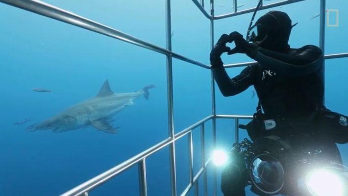 Comment filmer des grands requins blancs dans des cages au fond de l'eau ?