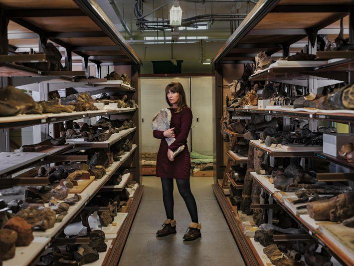 Les seuls restes connus d'Adratiklit, le plus vieux stégosaure jamais mis au jour, se trouvent au Muséum d'histoire naturelle du Royaume-Uni. ...