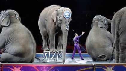 Les anciens éléphants du cirque Ringling seront transférés dans une réserve naturelle