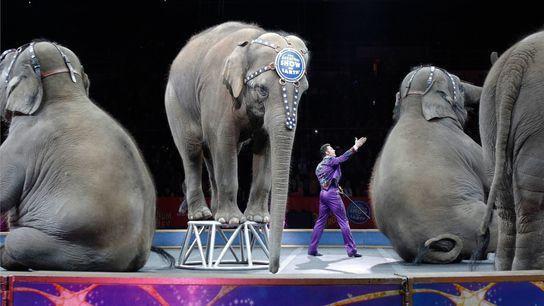 Les éléphants d'Asie du cirque Ringling Bros. and Barnum & Bailey exécutent pour la dernière fois ...
