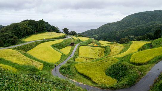 Rizière en terrasse (Niigata).