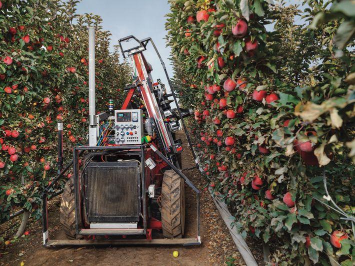Le robot récolteur d'Abundant Robotics utilise l'aspiration pour cueillir les pommes d'un verger, à Grandview (État ...