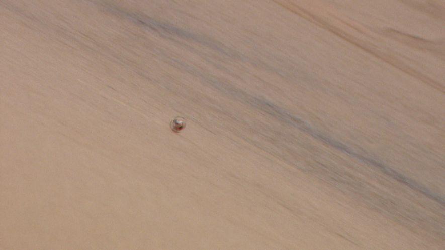 L'araignée Carparachne sert de modèle pour un robot