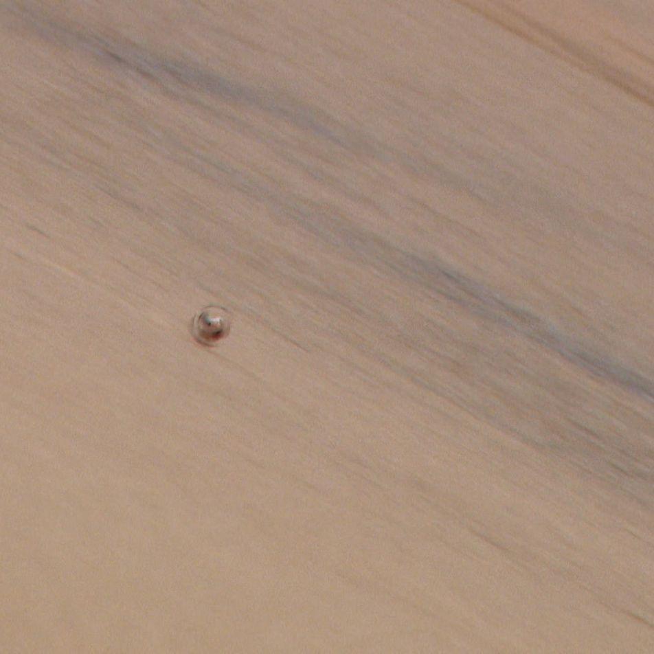 Cette araignée est une inspiration pour la recherche en robotique biomimétique
