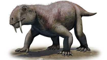 Découverte : les animaux à dents de sabre n'étaient pas tous des prédateurs