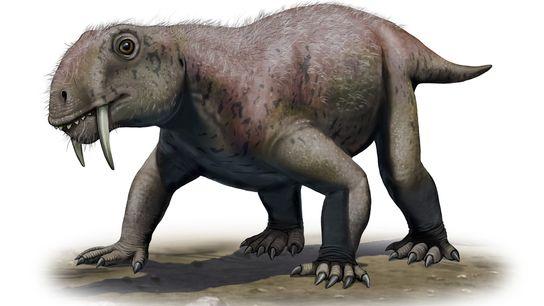 Cette illustration représente le protomammifère Tiarajudens eccentricus, le premier animal à dents de sabre connu apparu ...