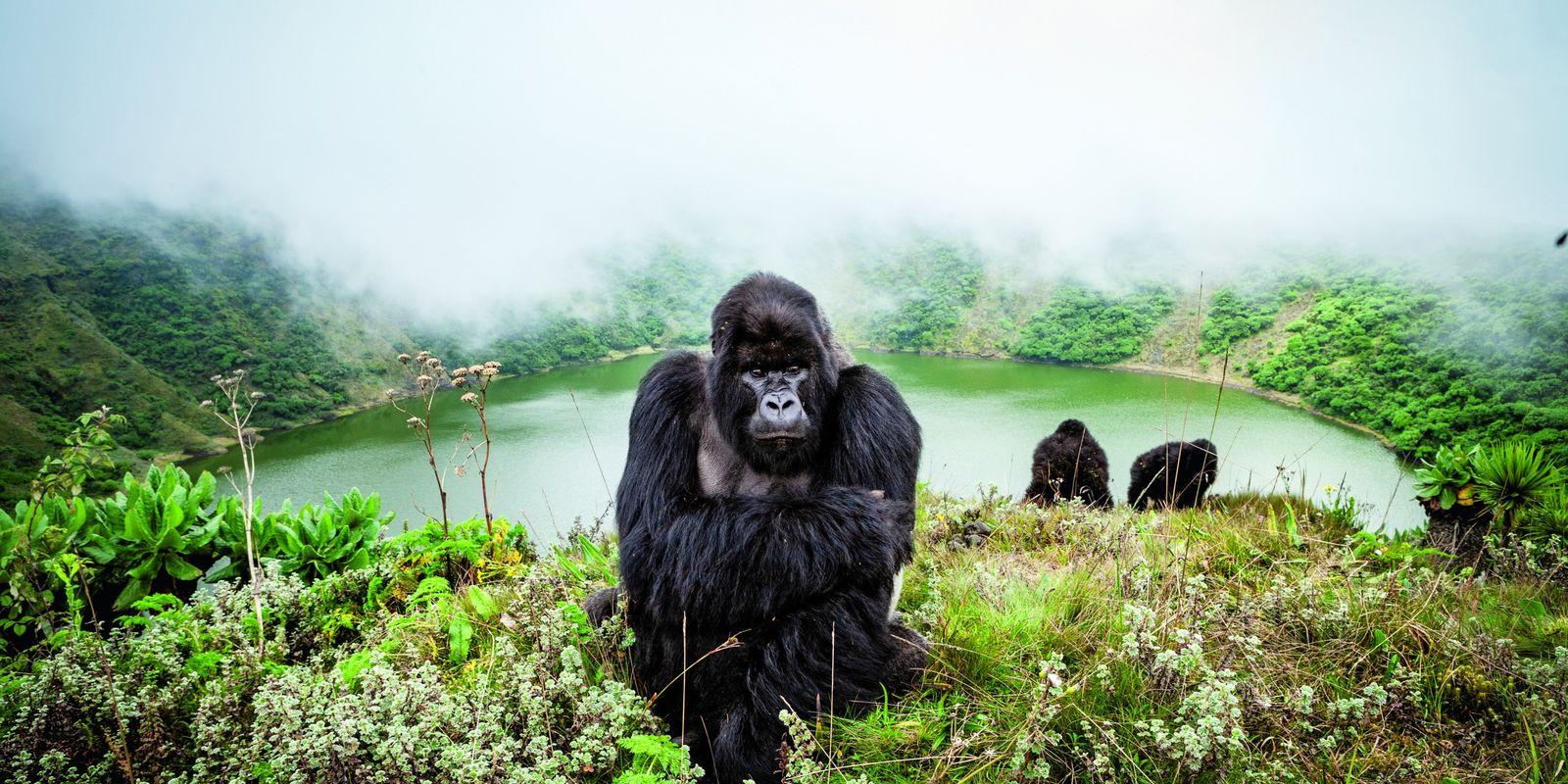 Plus durables, éthiques et responsables : les nouveaux safaris
