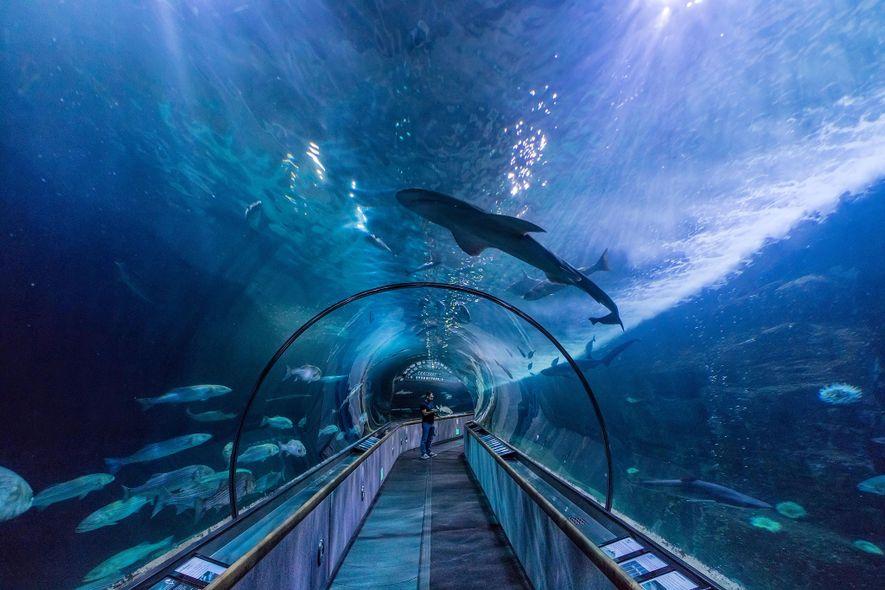 Les deux tunnels immergés qui couvrent à eux deux une distance de plus de 91 mètres, ...
