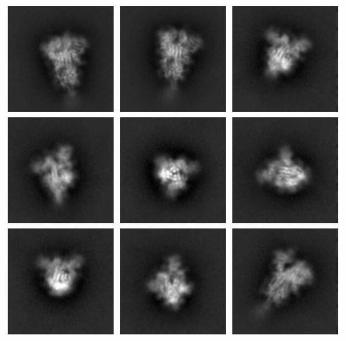 Les protéines sont si petites qu'il est impossible d'utiliser un microscope optique ordinaire pour les photographier. ...