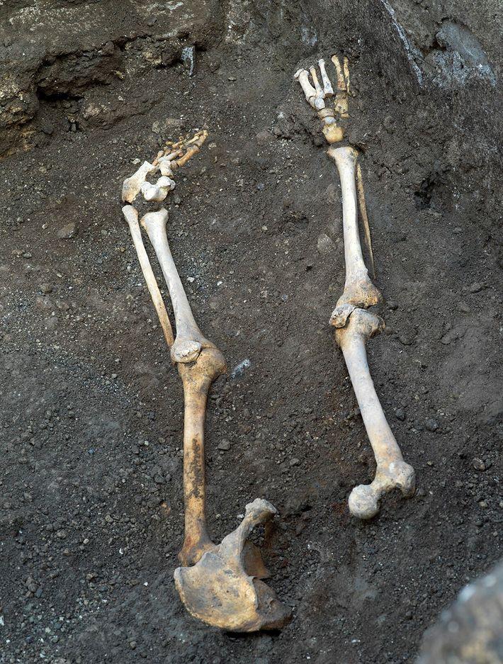 Les ossements découverts dans le thermopolium appartiendraient à un homme âgé d'une cinquantaine d'années.