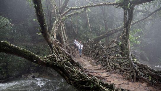 À Meghalaya, dans le East Khasi Hills, un groupe d'enfants traverse un pont racine vivant. Les ...