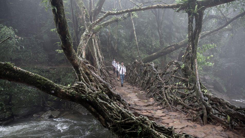 Les ponts vivants du Meghalaya : voyage entre eau et brume