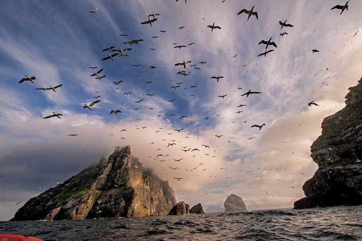 Les terres les plus sauvages d'Écosse sont celles des îles comme la brumeuse Boreray de l'archipel ...
